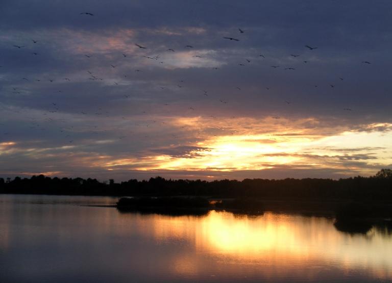 Guelph Lake.jpg